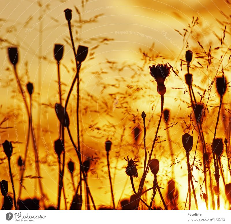 Nature Sky Flower Plant Summer Black Yellow Meadow Blossom Grass Park Landscape Bright Brown Environment Gold