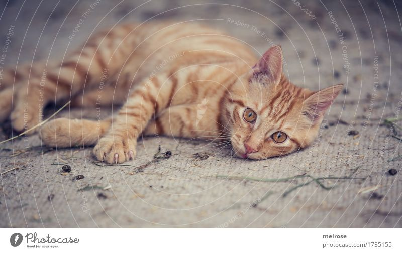 Cat City Beautiful White Relaxation Animal Baby animal Small Brown Contentment Lie Gold Perspective To enjoy Observe Cute