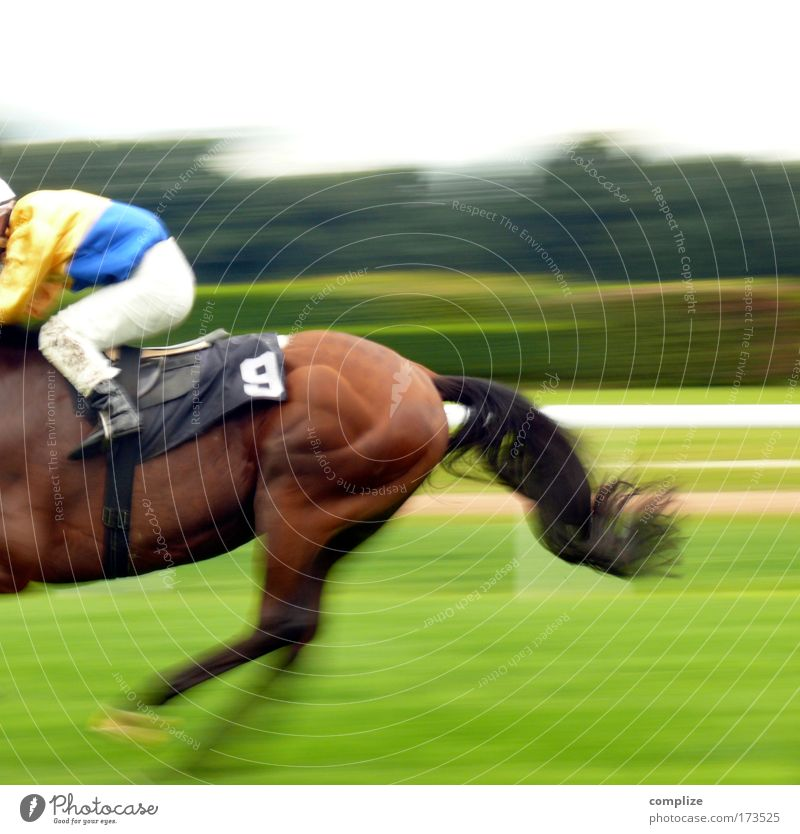 Animal Meadow Sports Field Success Speed Horse Target Leisure and hobbies Risk Racecourse Sporting event Equestrian sports Digits and numbers 9 Game of chance