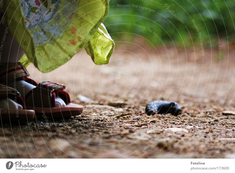 Nature Plant Animal Environment Landscape Grass Sand Earth Wild animal Study Beautiful weather Discover Snail Crouch Slug