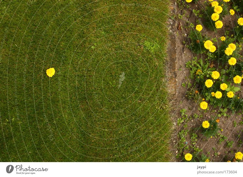 Nature Flower Plant Summer Loneliness Blossom Grass Garden Park Earth Uniqueness Living thing Border Beautiful weather Garden Bed (Horticulture) Self-confident