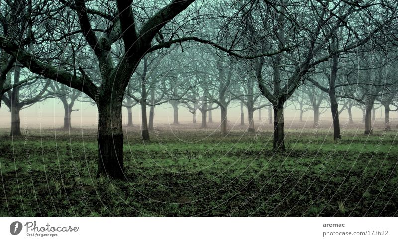 Nature Blue Green Tree Plant Calm Forest Landscape Earth Fog Bad weather Fruit trees Apple tree Plantation