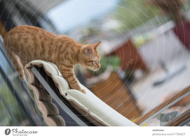 Shall I? Elegant Sky Summer Beautiful weather Plant Garden Pet Cat Animal face Pelt Paw 1 Baby animal Backrest Terrace Downward Jump Observe Sit Stand Brash