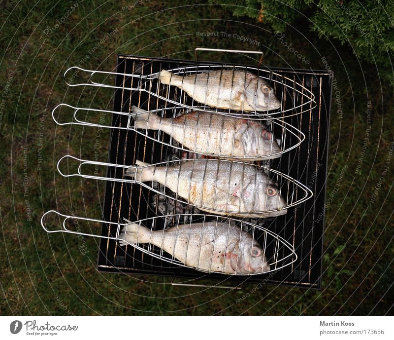 Vacation & Travel Animal Nutrition Food Leisure and hobbies Arrangement Multiple Fish Group of animals Cooking & Baking 4 Camping Barbecue (event) Parallel