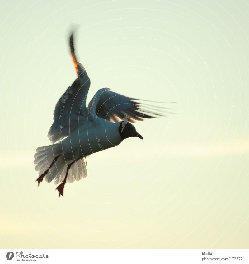 Nature Sky Animal Movement Freedom Bird Environment Flying Wing Joie de vivre (Vitality) Curiosity Brave Wild animal Seagull Interest