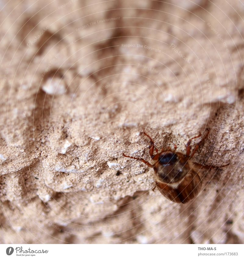 Nature Animal Environment Wall (building) Gray Stone Brown Power Going Natural Free Authentic Wing Touch Hang Beetle