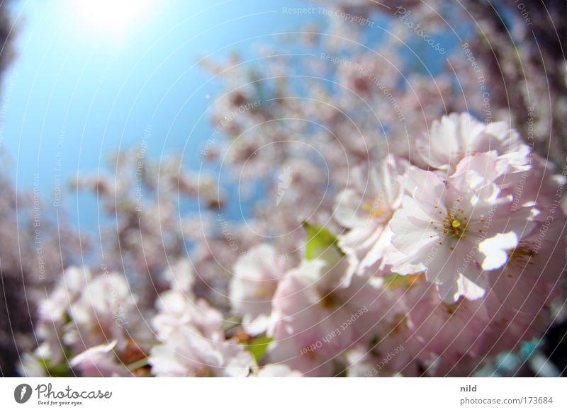 Nature Sky Tree Plant Joy Calm Life Blossom Spring Park Environment Happiness Joie de vivre (Vitality) Enthusiasm Spring fever Cloudless sky