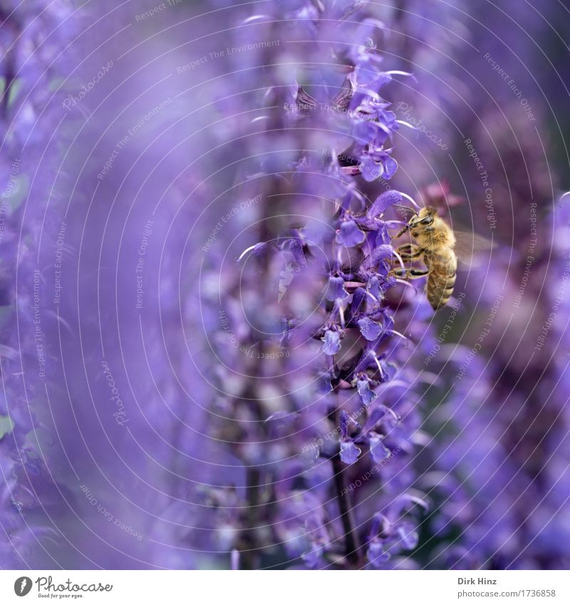 Nature Plant Animal Environment Eating Spring Garden Food Flying Park Wild animal Wing Blossoming Violet Bee Crawl
