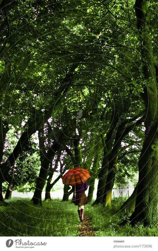 Woman Human being Nature Youth (Young adults) Tree Green Forest Cold Feminine Grass Dream Sadness Lanes & trails Park Rain Landscape