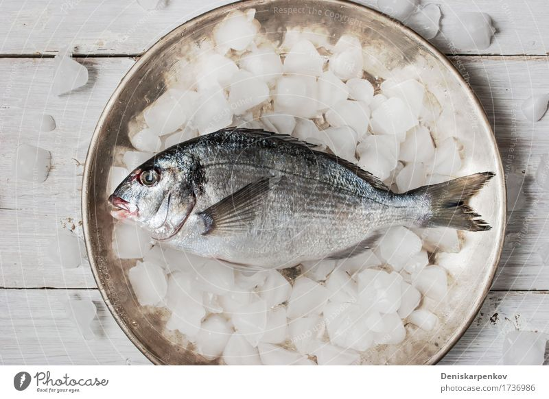 Dorado fish on the metal plate with ice Fish Seafood Nutrition Plate Table Wood Metal Fresh Black White background cooking Dish Food Ingredients Preparation Raw