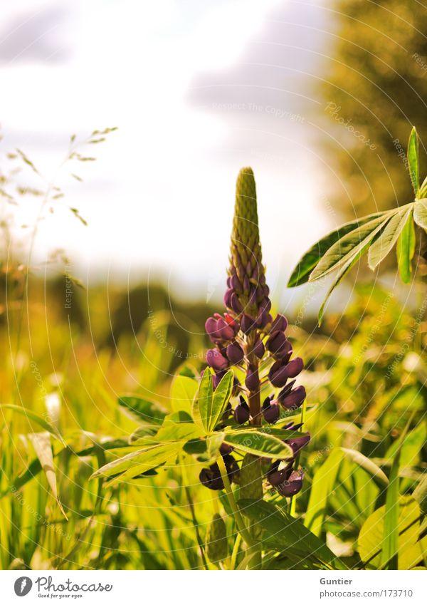 Sky Nature White Green Beautiful Tree Plant Sun Summer Flower Joy Clouds Landscape Yellow Warmth Grass