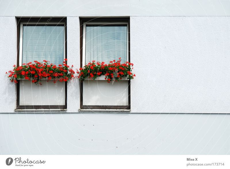 White Flower Plant House (Residential Structure) Wall (building) Window Wall (barrier) Facade In pairs Gloomy Simple Living or residing Story Boredom Curtain Twin