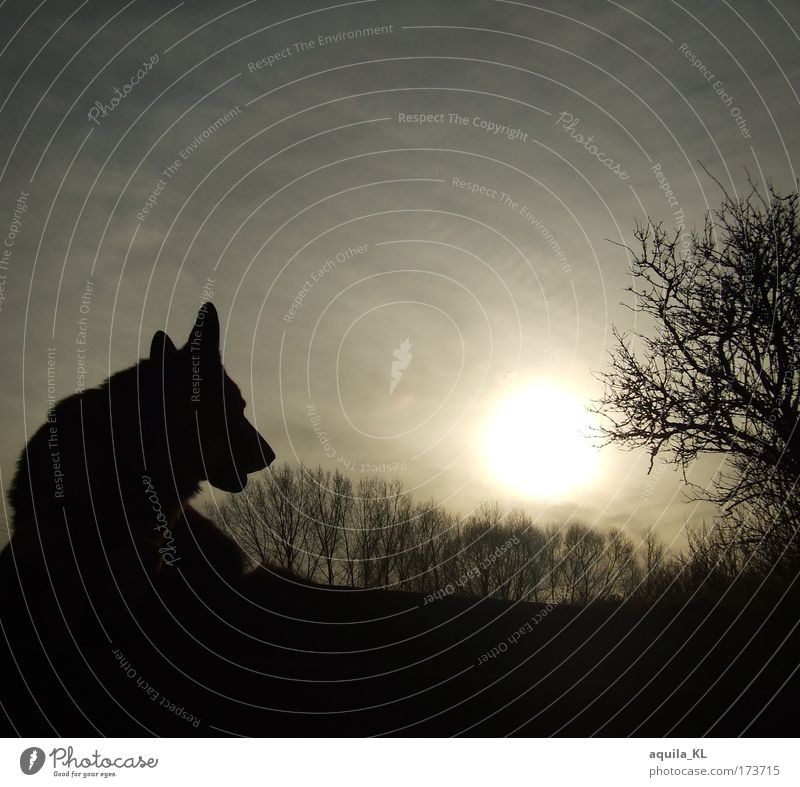 Sky Dog Nature Tree Sun Animal Black Dark Gray Horizon Branch Idyll Pet Farm animal Branchage Sunbeam