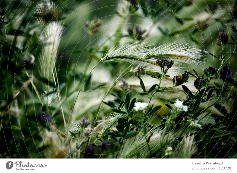 Hay fever IX. Colour photo Exterior shot Close-up Abstract Pattern Structures and shapes Deserted Copy Space left Day Shadow Contrast Silhouette Sunlight Blur