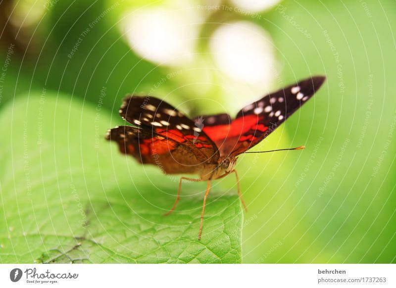 Beautiful Animal Meadow Garden Park Wild animal Wing Butterfly Animal face