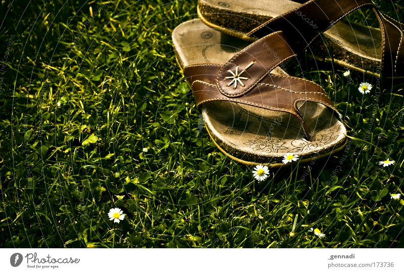 Nature Flower Grass Swimming pool Hip & trendy Flip-flops