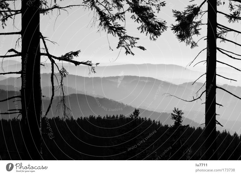 bleak prospects Black & white photo Exterior shot Day Panorama (View) Environment Landscape Forest Wood Discover Idyll Black Forest Large