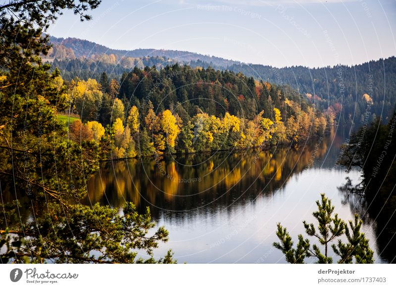 Autumn mood in Bavaria Vacation & Travel Tourism Trip Far-off places Freedom Mountain Hiking Environment Nature Landscape Plant Animal Beautiful weather Tree