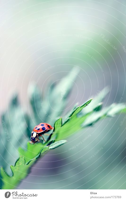 descent Exterior shot Detail Copy Space top Blur Nature Beetle Ladybird 1 Animal Bright Climbing Point Good luck charm