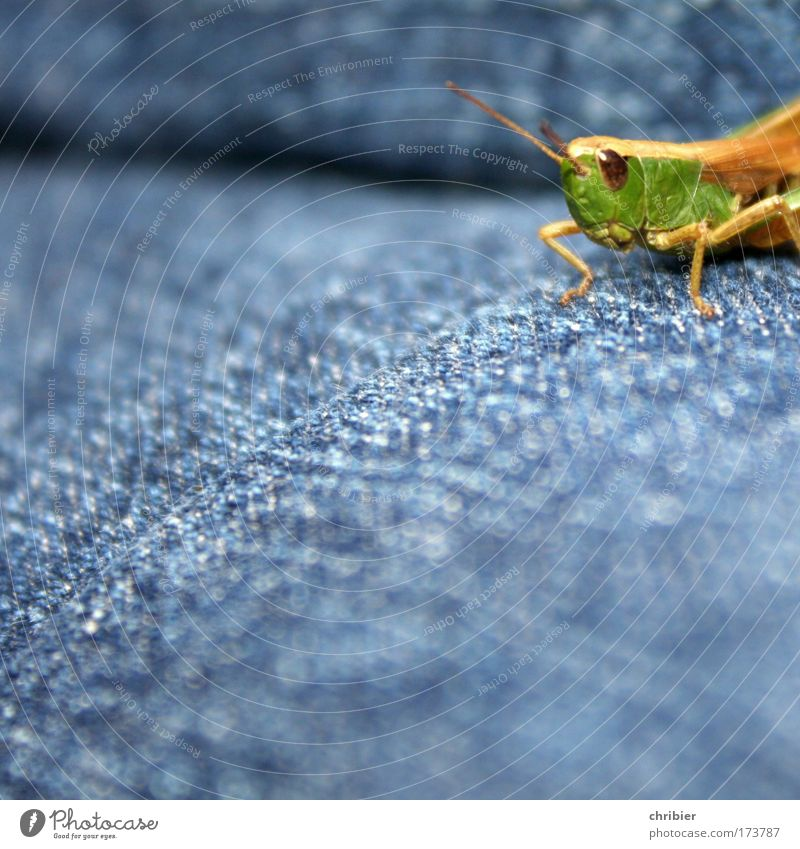 Nature Green Blue Summer Calm Animal Jump Power Small Jeans Break Animal face Observe Track and Field Curiosity Fatigue