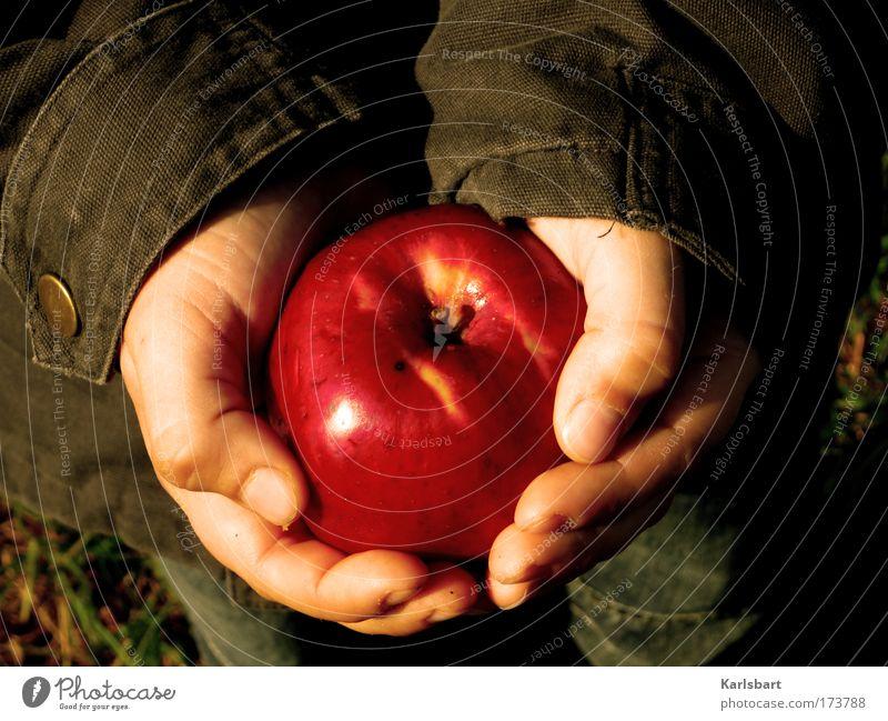 Human being Nature Hand Life Nutrition Autumn Boy (child) Garden Grass Food Healthy Infancy Skin Fruit Fingers Child