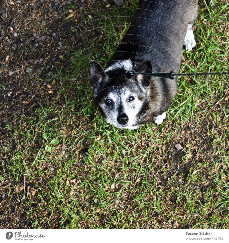 Looking Old Black Animal Grass Gray Dog Park Wait Rope Tall Earth Growth Pelt Cute Pet