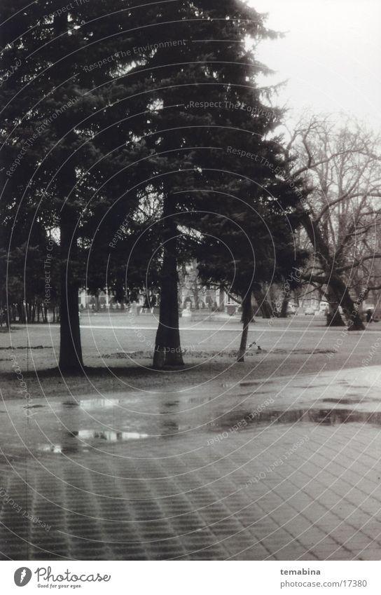 Latvia mb Riga Park tree latvia Black & white photo