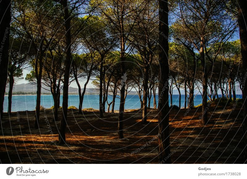shaded place Nature Animal Earth Water Sky Horizon Summer Wild plant Coast Beach Ocean Sardinia Europe Deserted Happiness Safety Attentive Unwavering Purity