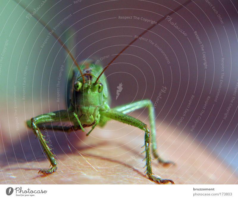 Summer Animal Wait Broken Observe Uniqueness Curiosity Animal face Financial Industry Locust