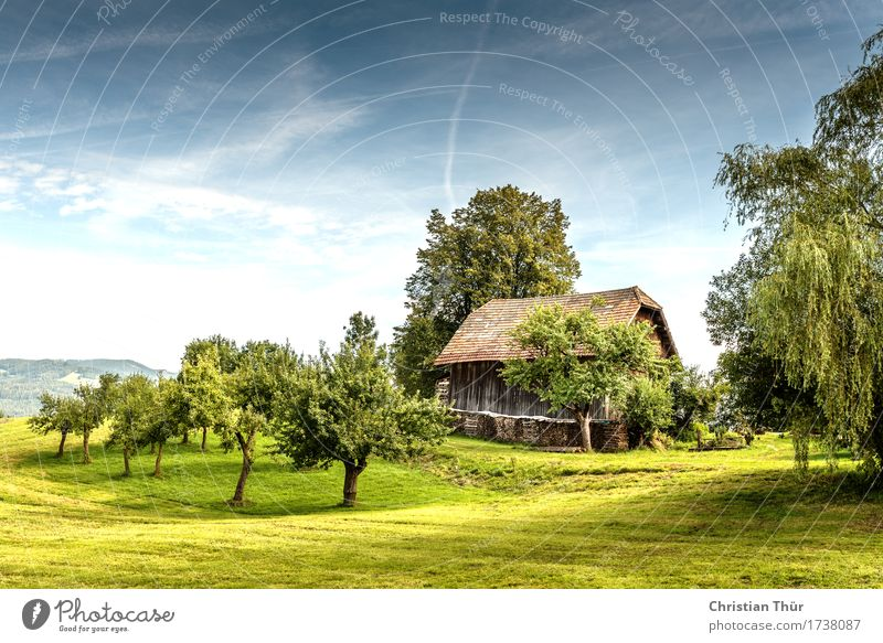 country life Life Harmonious Contentment Senses Relaxation Calm Meditation Vacation & Travel Tourism Trip Summer Summer vacation Sun Environment Nature