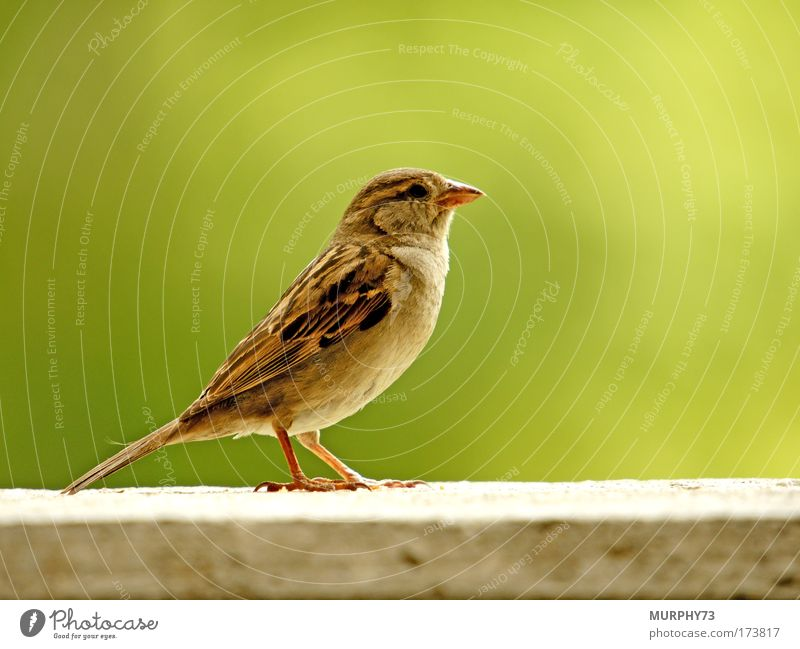 Nature Green Animal Gray Brown Bird Environment Stand Posture Animal face Wing Observe Wild animal Brash Placed Claw
