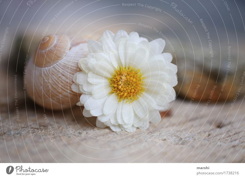 Flora&Fauna Nature Plant Flower Animal Snail 1 Moody Marguerite Snail shell Vineyard snail Stone Blur Garden Colour photo Exterior shot Close-up Detail