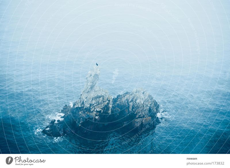 Ocean Blue Calm Loneliness Animal Stone Bird Waves Fog Rock Sit Island Crouch Seat Rest