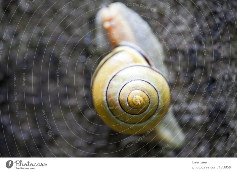 Eyes Brown Concrete Touch Appetite Damp Snail Spiral Feeler Caution Slimy Snail shell Vineyard snail