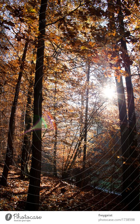 Breaking through 2 Contentment Relaxation Calm Leisure and hobbies Freedom Environment Nature Landscape Sun Sunrise Sunset Sunlight Autumn Tree Forest Hiking