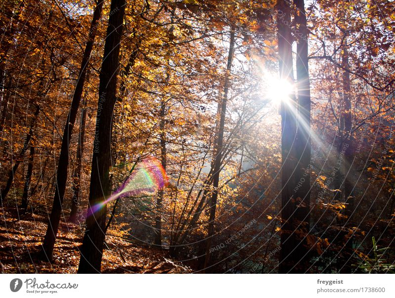 Breaking through 4 Harmonious Relaxation Calm Trip Environment Nature Landscape Sun Sunrise Sunset Sunlight Autumn Tree Forest Hiking Free Colour photo