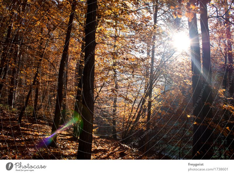 Breaking through 3 Leisure and hobbies Environment Nature Landscape Sun Sunrise Sunset Sunlight Autumn Tree Forest Free Freedom Colour photo Exterior shot Day