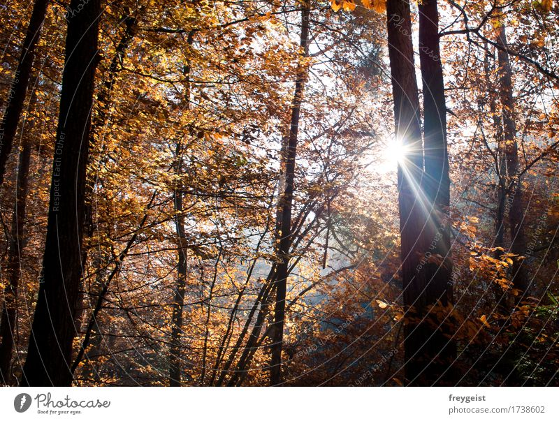 Breaking through 1 Harmonious Contentment Relaxation Calm Leisure and hobbies Freedom Summer Sun Hiking Environment Nature Landscape Sunlight Autumn Tree Forest