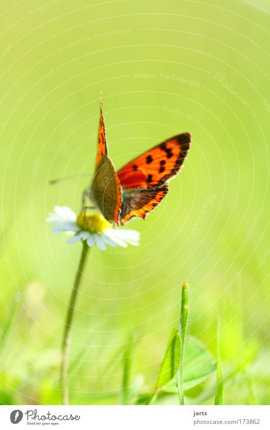 Nature Beautiful Plant Summer Calm Animal Meadow Blossom Park Free Esthetic Natural Serene Butterfly Wild animal Exotic