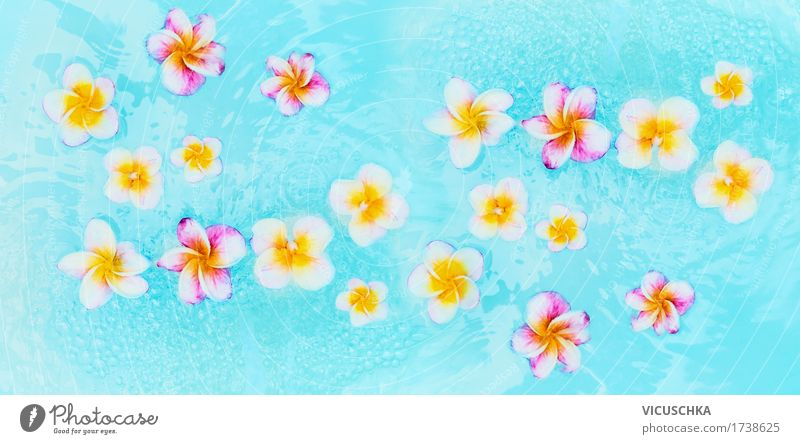Colourful Frangipani flowers in turquoise blue water Style Design Wellness Relaxation Spa Swimming pool Vacation & Travel Summer Nature Plant Flag Yellow
