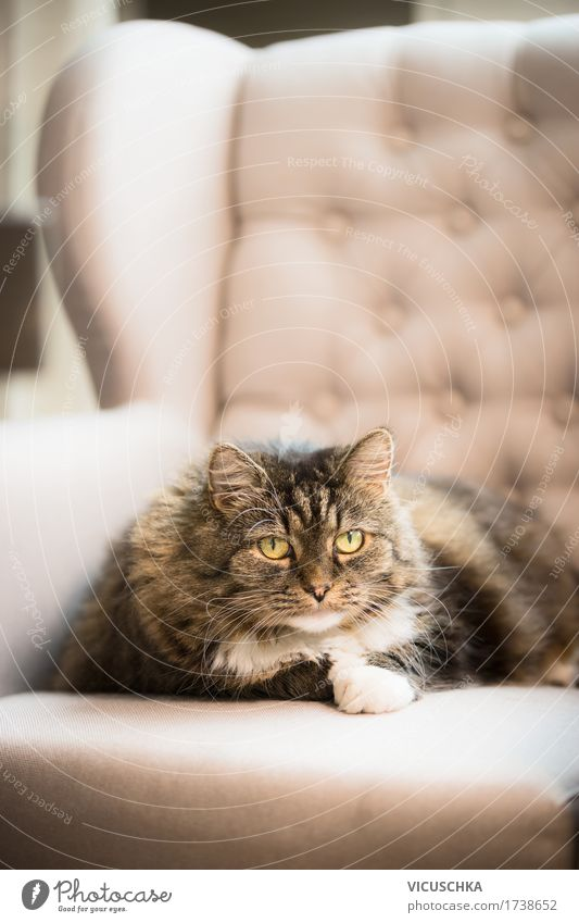 Cat Nature Animal House (Residential Structure) Joy Lifestyle Style Design Flat (apartment) Living or residing Lie Sofa Pet Living room Cozy Armchair