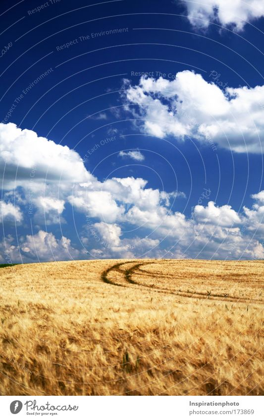 Nature Sky White Blue Plant Summer Clouds Yellow Above Grass Lanes & trails Warmth Landscape Air Bright Field