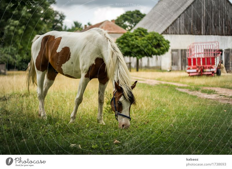 country life Nature Animal Farm animal Horse 1 Feeding To enjoy Brown Green Red Happy Contentment Love of animals Serene Calm Relaxation Colour photo