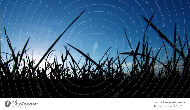 Sky Sun Clouds Meadow Grass Lawn Blade of grass