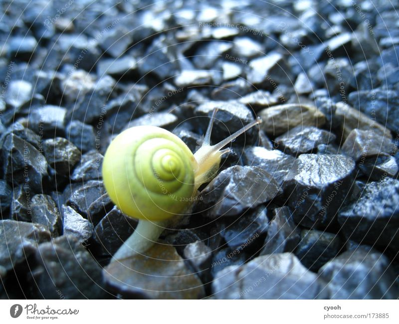 no easy way Snail Rain Fragile Close-up Macro (Extreme close-up) Animal Mollusk Stone Street Lanes & trails Diligent Endurance Soft Curiosity Damp Target