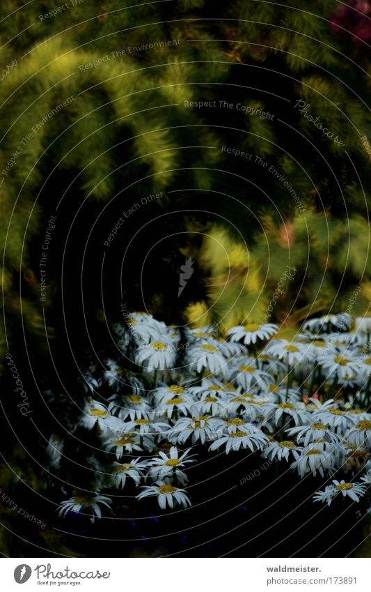 Nature Plant Summer Blossom Park Romance Fairy tale