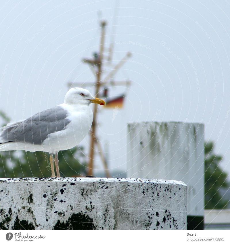 [AI09.1] Happy birthday, ces! Animal Bird Sit Seagull Bollard Mast Baltic Sea Colour photo Exterior shot
