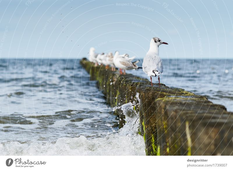 Are you looking?! Vacation & Travel Summer Summer vacation Water Cloudless sky Waves Coast Beach Baltic Sea Ocean Surf Wooden stake Break water Bird Seagull