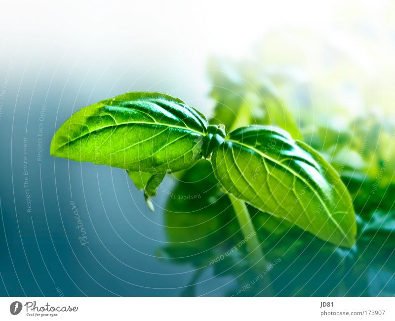 fresh green Colour photo Interior shot Close-up Detail Copy Space top Day Contrast Blur Deep depth of field Herbs and spices Nutrition Plant Foliage plant