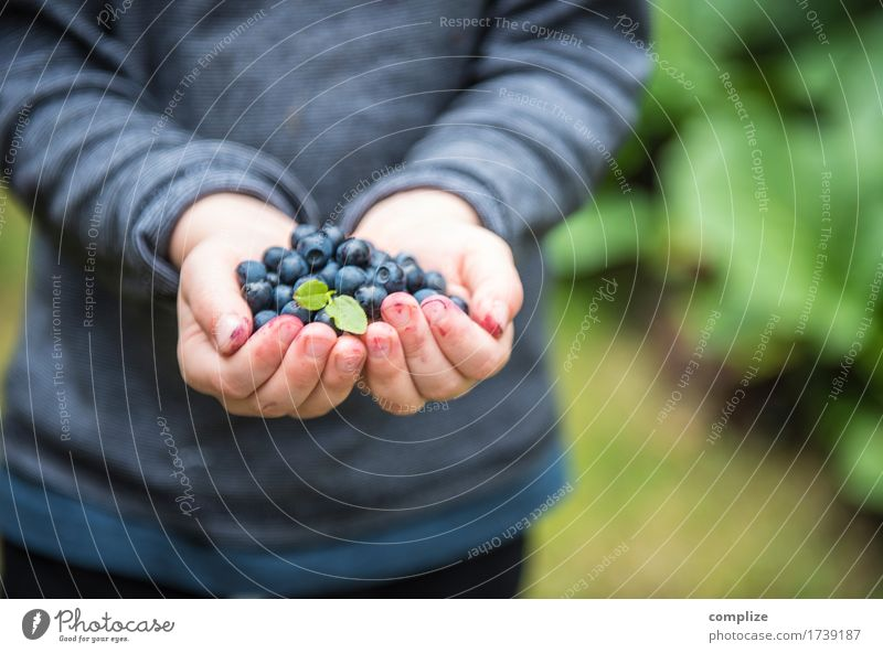 blue bear Food Fruit Blueberry Nutrition Eating Picnic Organic produce Vegetarian diet Diet Healthy Healthy Eating Contentment Child School 3 - 8 years Infancy